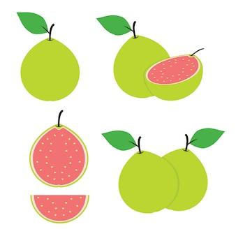 Guava fruit and guava slice design vector set