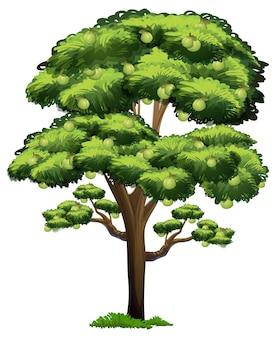 白い背景で隔離の漫画スタイルのグアバ果樹