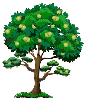 구아바 과일 나무 흰색 절연