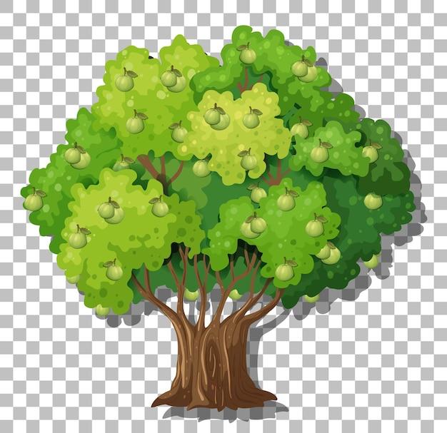Дерево гуавы на прозрачном фоне