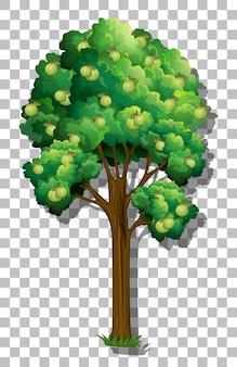 透明な背景のグアバの木