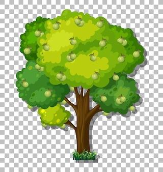 투명 한 배경에 구아바 나무