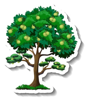 Adesivo albero di guaiava su sfondo bianco