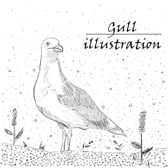 Gull ink illustration on white background.