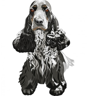 銃犬座っているイングリッシュコッカースパニエル