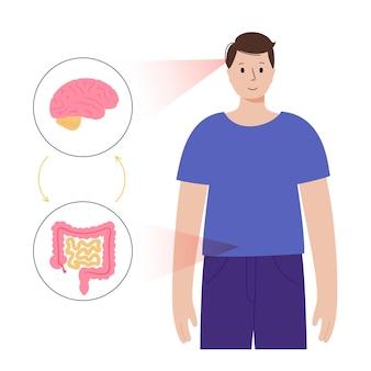 脳腸相関と微生物叢の概念。人体、小腸および大腸の腸管神経系。脳から消化管への信号。結腸、腸、大脳のフラットベクトル図