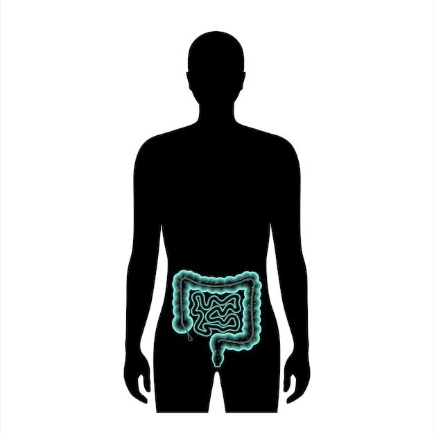 장내 마이크로바이옴 의료 포스터. 인간의 장에 있는 미생물총, 박테리아, 바이러스 및 미생물. 미생물총 개념입니다. 소화관 3d 벡터 일러스트레이션의 대사 기능, 병원체 및 질병.