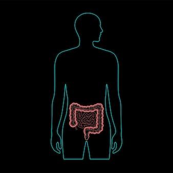 장내 마이크로바이옴 의료 포스터. 인간의 장에 있는 미생물, 박테리아, 바이러스 및 미생물.