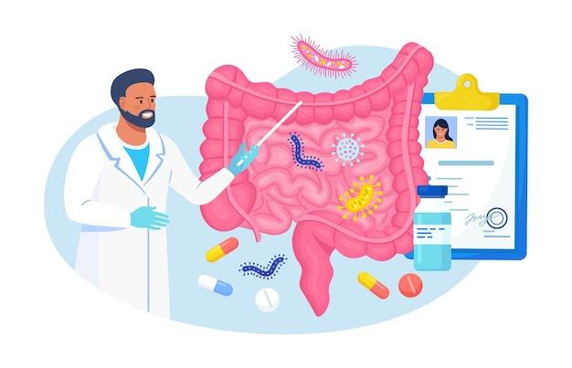 腸内微生物、友好的な植物相、胃腸内微生物健康的な生活のための抽象的な消化胃の生物。消化管、腸、消化器系、腸を検査する医師