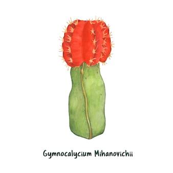 手描きのgymnocalycium mihanovichii月サボテン