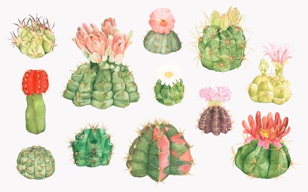 手描きのgymnocalyciumの顎のサボテンのコレクション