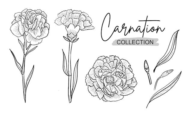 カーネーションの花インクh結婚式の飾りの線画