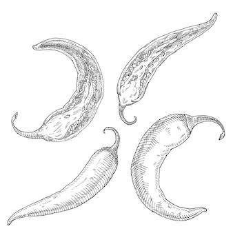 반 및 전체 고추 고추. 빈티지 벡터 해칭 검은 그림입니다. 흰색 배경에 고립. 손으로 그린 디자인