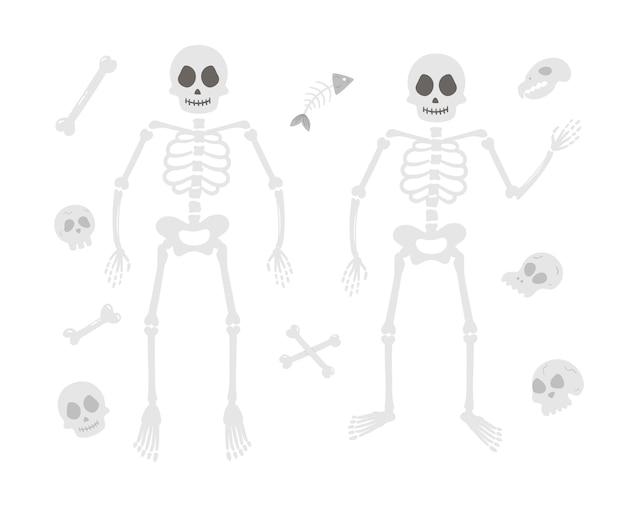 인간의 해골 할로윈 파티 그림입니다. 벡터 두개골과 뼈의 집합입니다. 가을 samhain 파티를 위한 무서운 디자인. 모든 성도의 날 요소 컬렉션입니다.