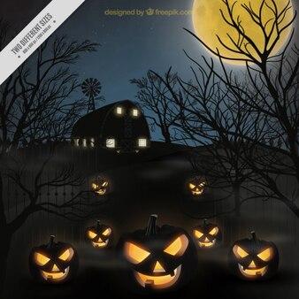 Halloween pumpkin backgound
