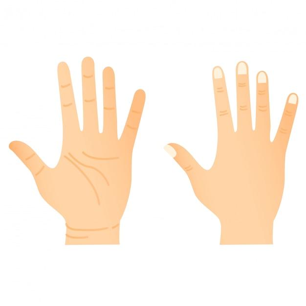 Часть тела руки