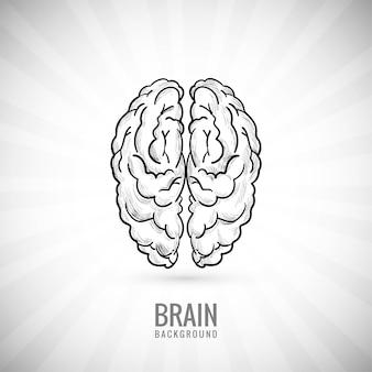 Рука рисовать эскиз мозга