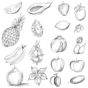 白い背景の上の手描きのコレクションの果物のスケッチ