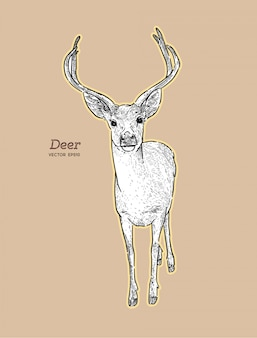 Hand draw deer