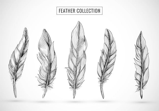Hand draw feather sketch set design
