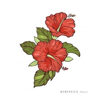 手はハイビスカスの花のイラストを描いてください。フローラルリース。白い背景の上の植物の花カード。