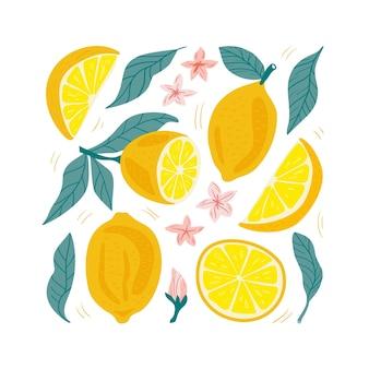 手描きレモンセット