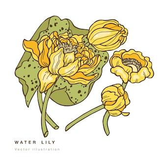 손으로 그리는 연꽃 그림. 수련와 흰색 배경에 식물 꽃 카드.