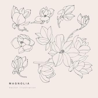 손으로 목련 꽃 그림을 그립니다. 꽃 화환. 흰색 바탕에 식물 꽃 카드입니다.