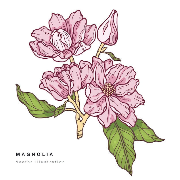 手はモクレンの花のイラストを描いてください。フローラルリース。白い背景の上の植物の花カード。