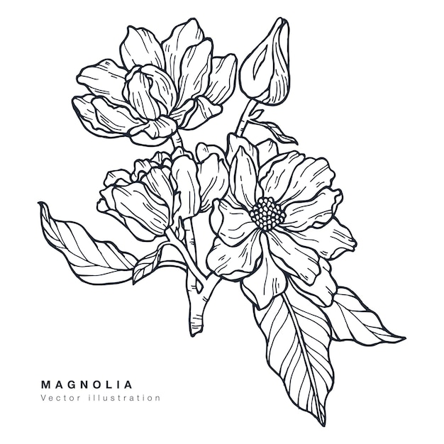 Hand draw magnolia flowers illustration. floral wreath. botanical floral card on white background.