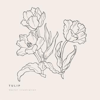 Hand draw tulip flowers illustration.