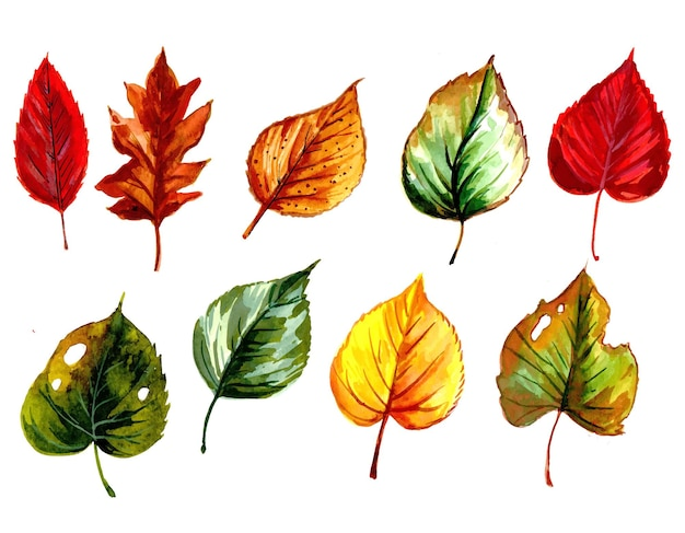 Hand draw watercolor colorful leaf set design