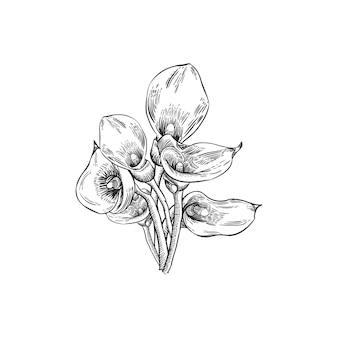 Hand drawing floral background with calla lily flowers