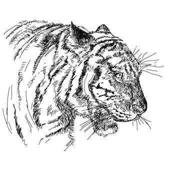白い背景で隔離の虎の頭を描く手描き。ベクトルイラスト