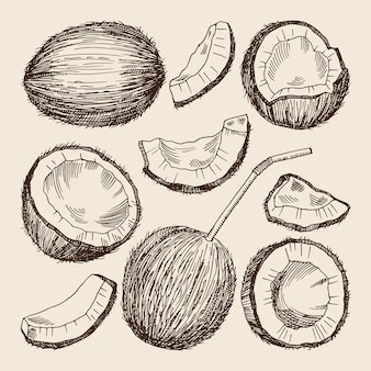 Hand drawing illustrations of different sides of coconut.