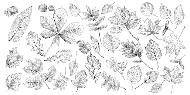 Hand drawing leaves set