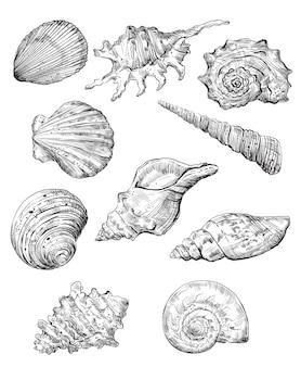 Набор рисования рук из ракушек. векторная иллюстрация монохромный эскиз, изолированные на белом фоне.