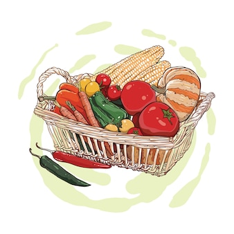 Hand drawing of sweet potatoes, potatoes, pumpkin and carrots in a wicker basket