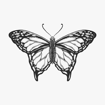 手描きのビンテージバタフライモノクロベクトルイラスト