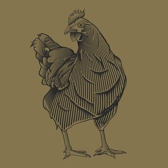 Hand drawing vintage chiken illustration
