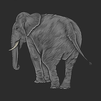 Hand drawing vintage elephant vector illustration