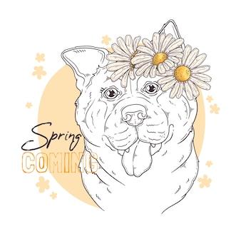 Ручной обращается собака акита с цветами
