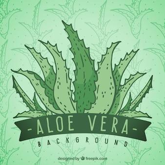 손으로 그린 알로에 베라 녹색 배경