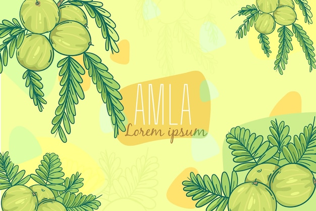 Hand drawn amla fruit background illustrated