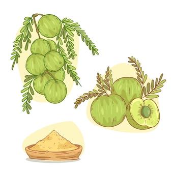 Hand drawn amla fruit elements
