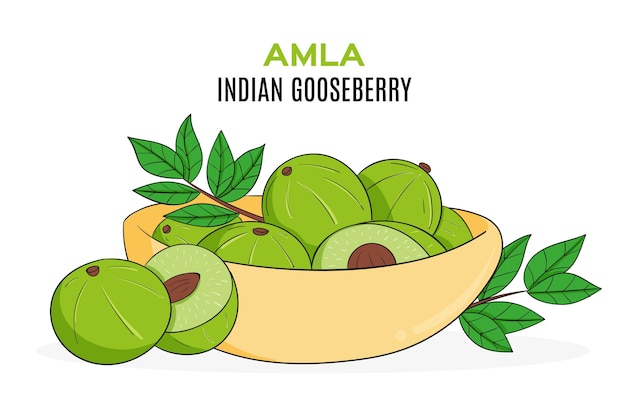 Hand drawn amla fruit illustrated