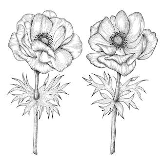 손으로 그린 아네모네 꽃과 나뭇잎 그림 그리기.
