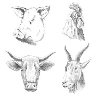 손으로 그린 동물. 농장 가축 동물. 포스터 또는 웹에 대 한 빈티지 조각 삽화입니다. 그래픽 스타일로 손으로 그린 돼지, 수탉, 암소 및 염소 스케치