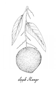 Hand drawn of apple mango