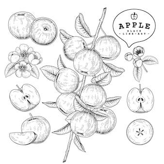 Набор рисованной apple, изолированные на белом фоне.